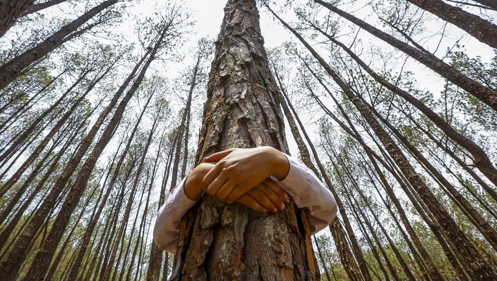 Día Mundial del Árbol (28 de Junio)