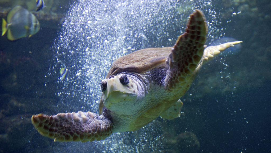 Día Mundial de las Tortugas Marinas (16 de Junio)