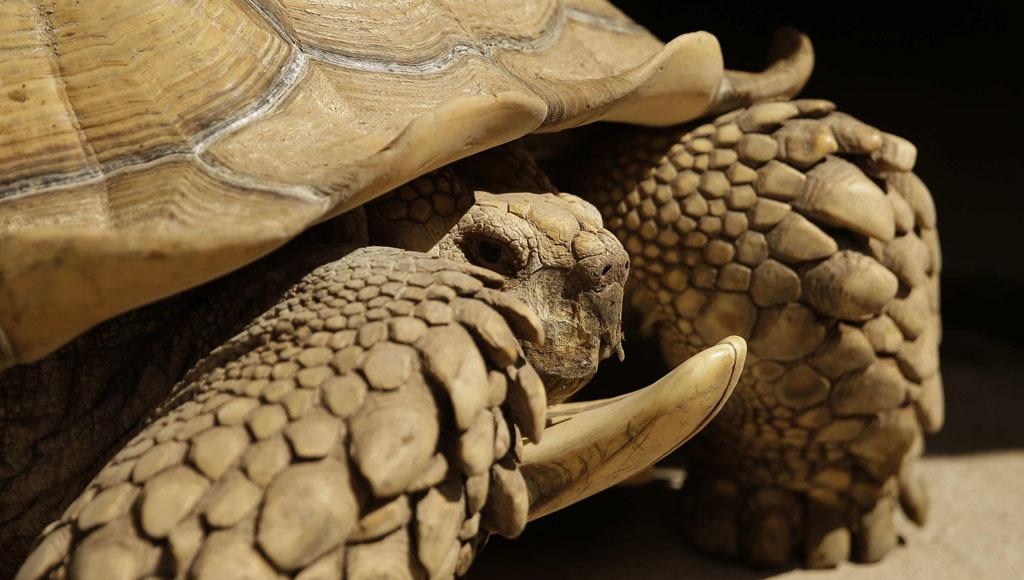 Día Mundial de las Tortugas (23 de Mayo)
