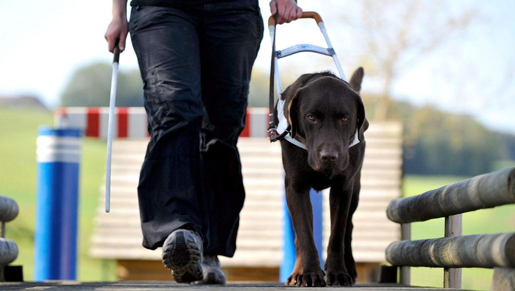 Día Internacional de los Perros Guía (29 de abril)