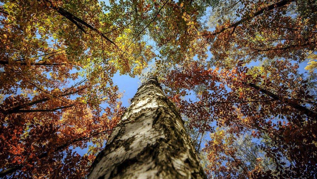 Día Forestal Mundial (21 de marzo)