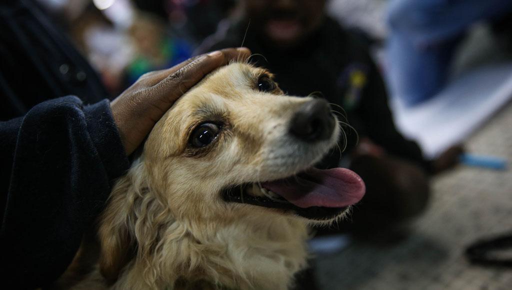 Día Mundial del Perro (21 de Julio)