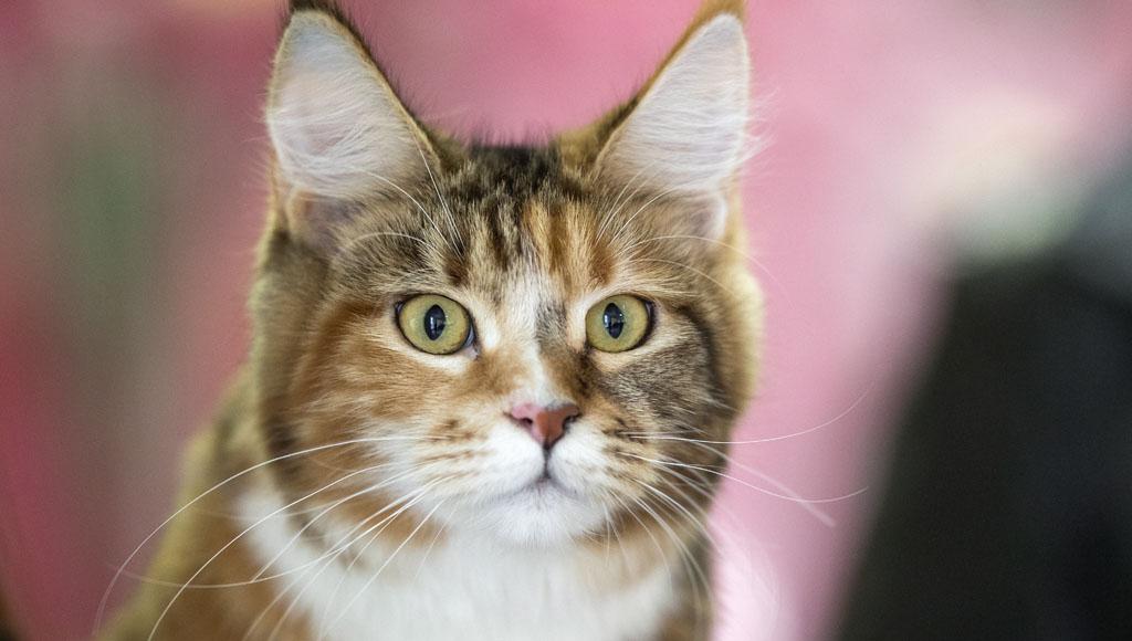 Día Internacional del Gato (8 de Agosto)