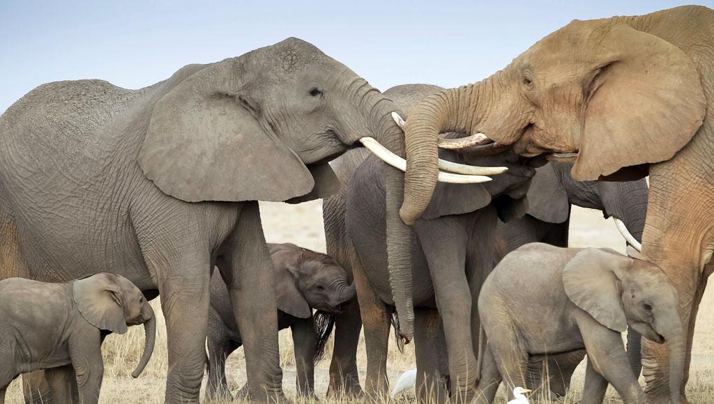 Día Internacional de los Elefantes (12 de Agosto)