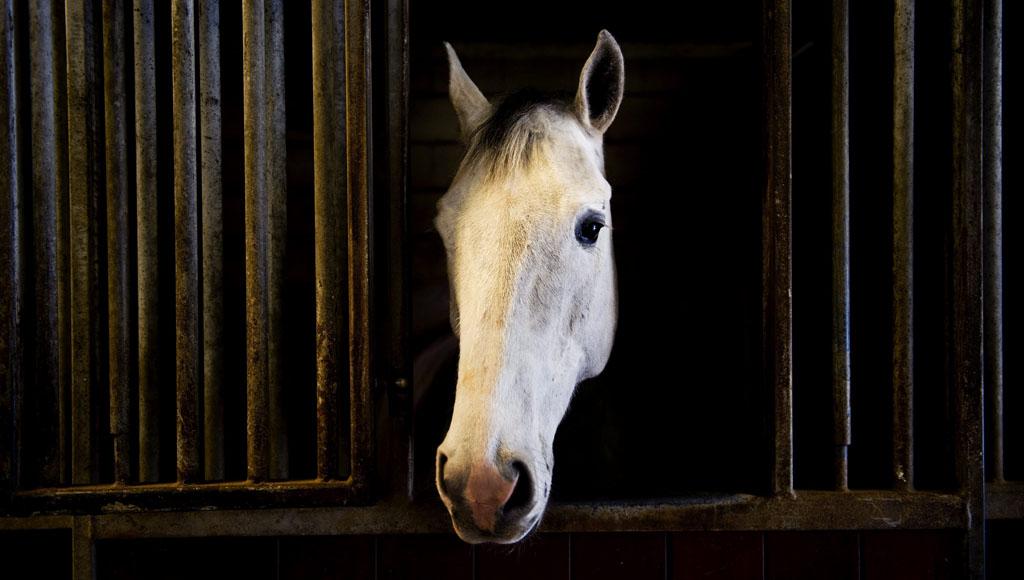 Día Internacional del caballo (20 de septiembre)